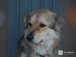 Гройсман: «Россия стала второй страной в мире, закрепившей права животных в Конституции»