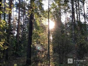 Разрешить превентивную вырубку деревьев из-за пожаров хотят разрешить в Нижегородской области