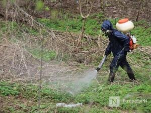 Около 300 нижегородцев пострадали от нападения клещей