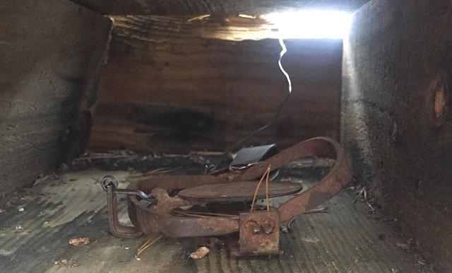 Запрещенные капканы на куницу обнаружили в Керженском заповеднике - фото 1