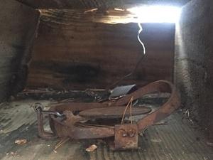 Запрещенные капканы на куницу обнаружили в Керженском заповеднике