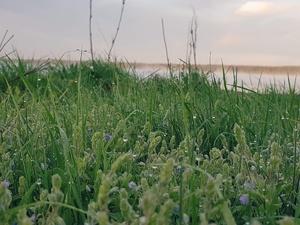 Заморозки до −4°С на поверхности почвы ожидаются в Нижегородской области