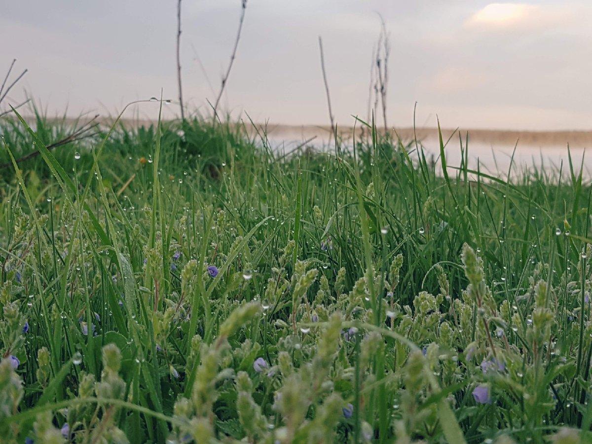 Заморозки до −4°С на поверхности почвы ожидаются в Нижегородской области - фото 1