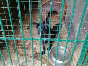 Бесславный конец нижегородского зоопарка