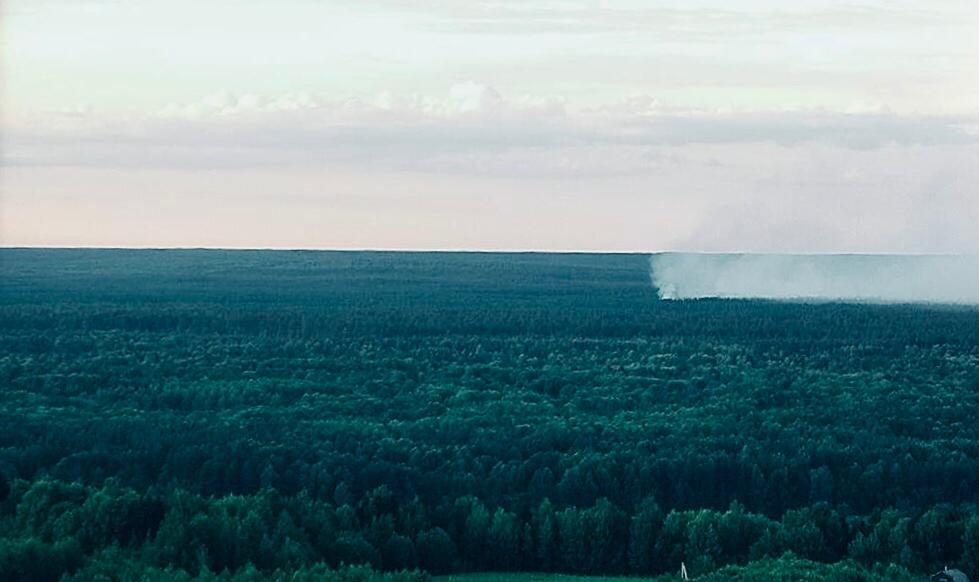 Два лесных пожара потушили в Нижегородской области за сутки - фото 1