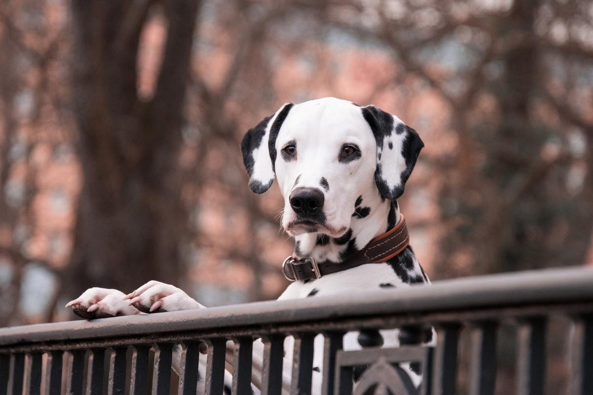 Пять важнейших правил выгула домашнего животного во время карантина - фото 1