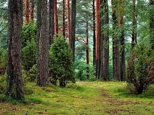 Молодой парень заблудился в лесу Лукояновского района