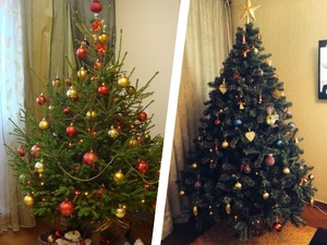 Какую елку лучше выбрать в квартиру: настоящую или искусственную
