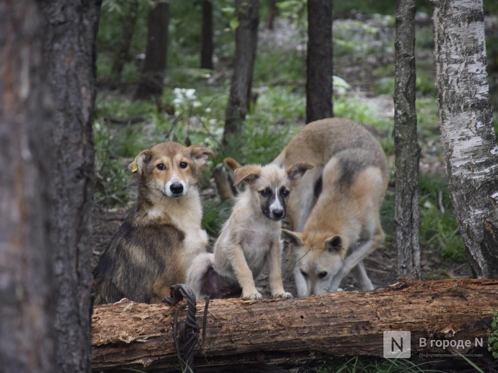Догхантеры в Нижнем Новгороде: что им грозит и как обезопасить свою собаку - фото 2