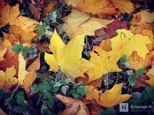 Похолодание до +7°С и дожди придут в Нижний Новгород