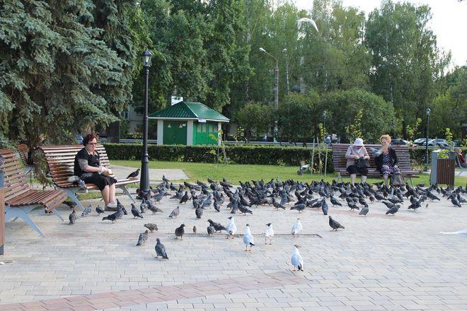 Не прошло и года: нижегородские скверы нужно благоустраивать заново - фото 25