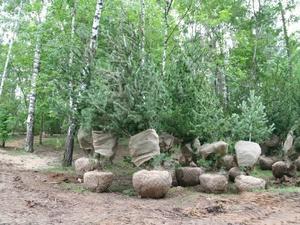 70 сосен румелийских высадят в Светлоярском парке