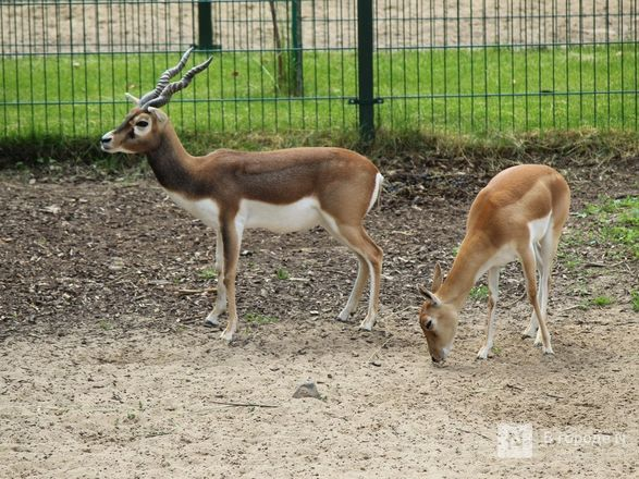 Выжить в пандемию: что происходило в закрытом зоопарке «Лимпопо» - фото 7