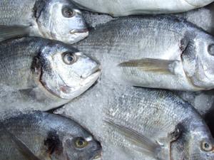 В Нижегородской области задержано четыре вагона рыбы из Владивостока