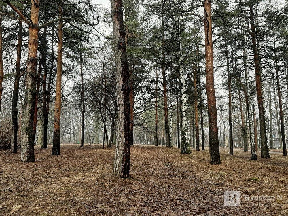 Экзотические деревья могут высадить в нижегородском парке «Швейцария»