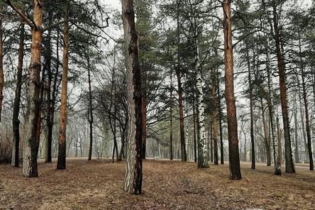 «Семейные» деревья посадят нижегородцы в парке «Швейцария»